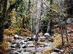 forest3-Kopie