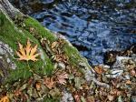 leaves-Kopie