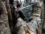Stein im Baum