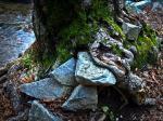 stone_or_tree2-Kopie