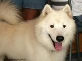 hunde_alaska2.jpg