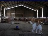 sirius_shelter2.jpg