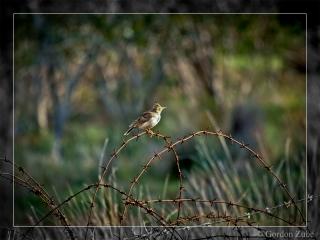 bird_on_line