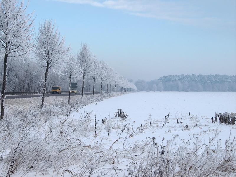 winter2010_11