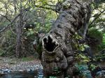 tree2-Kopie