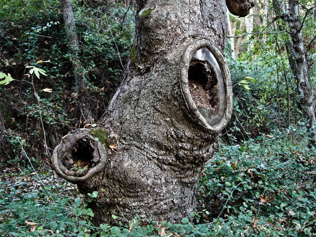 tree-Kopie