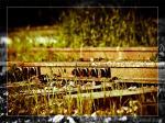 cyprus_railway